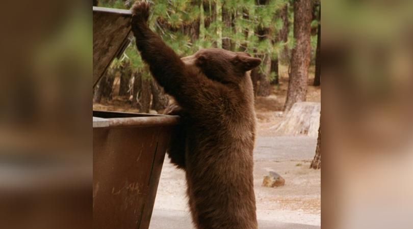 bear dumpster_1544839282032.jpg.jpg