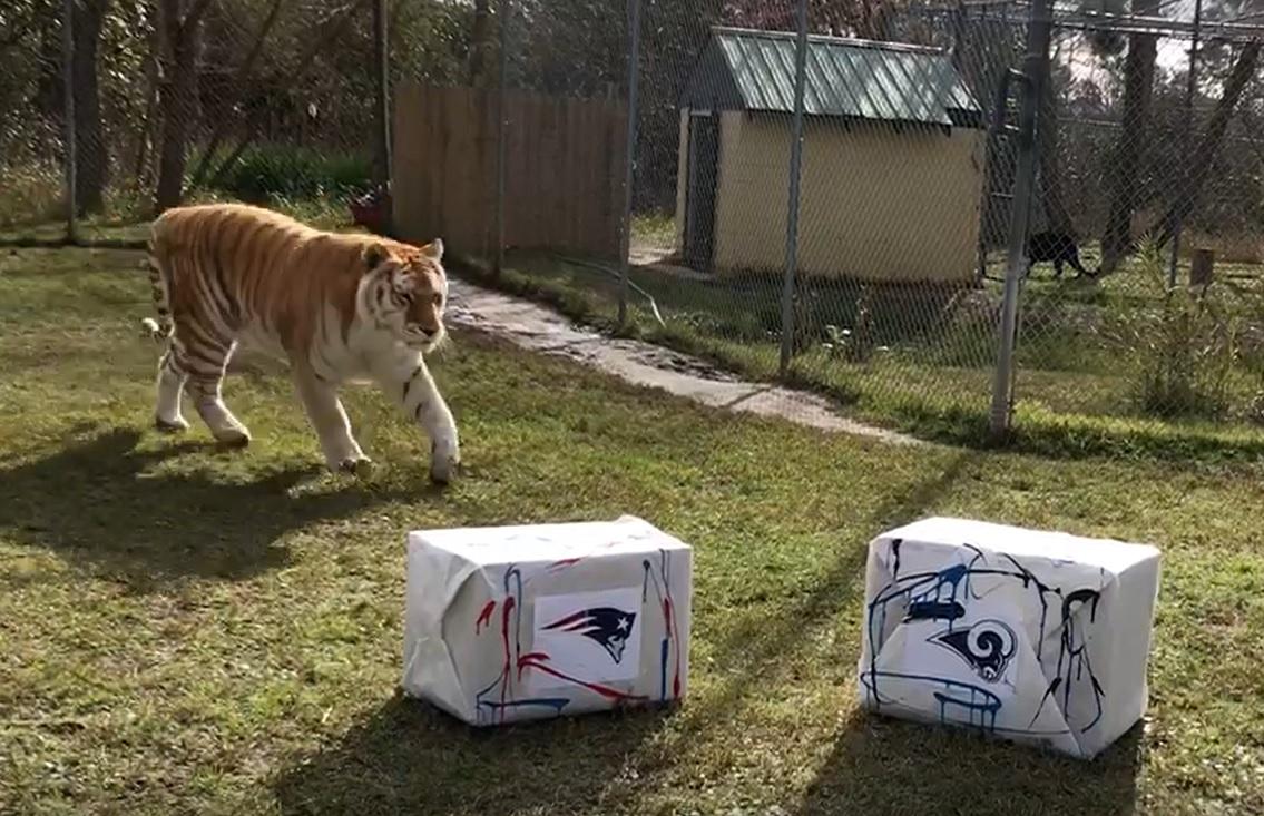 Omar Super Bowl predict_1549215527605.jpg.jpg