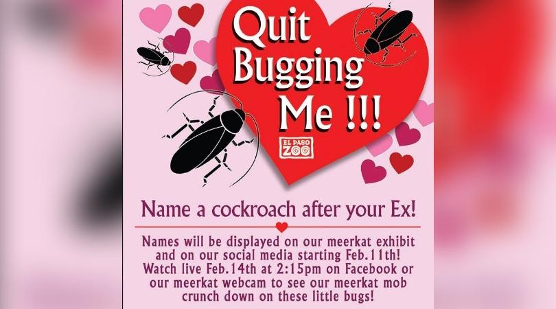 cockroach_1549577180854.jpg