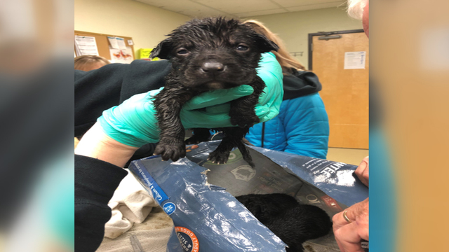 Puppies found stuffed inside dog food bag, sealed with tape