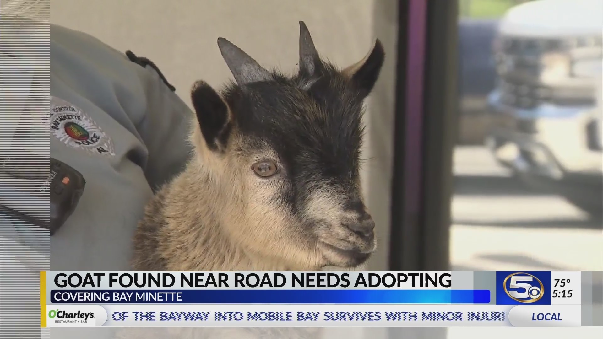 VIDEO: Runaway goat detained in Bay Minette