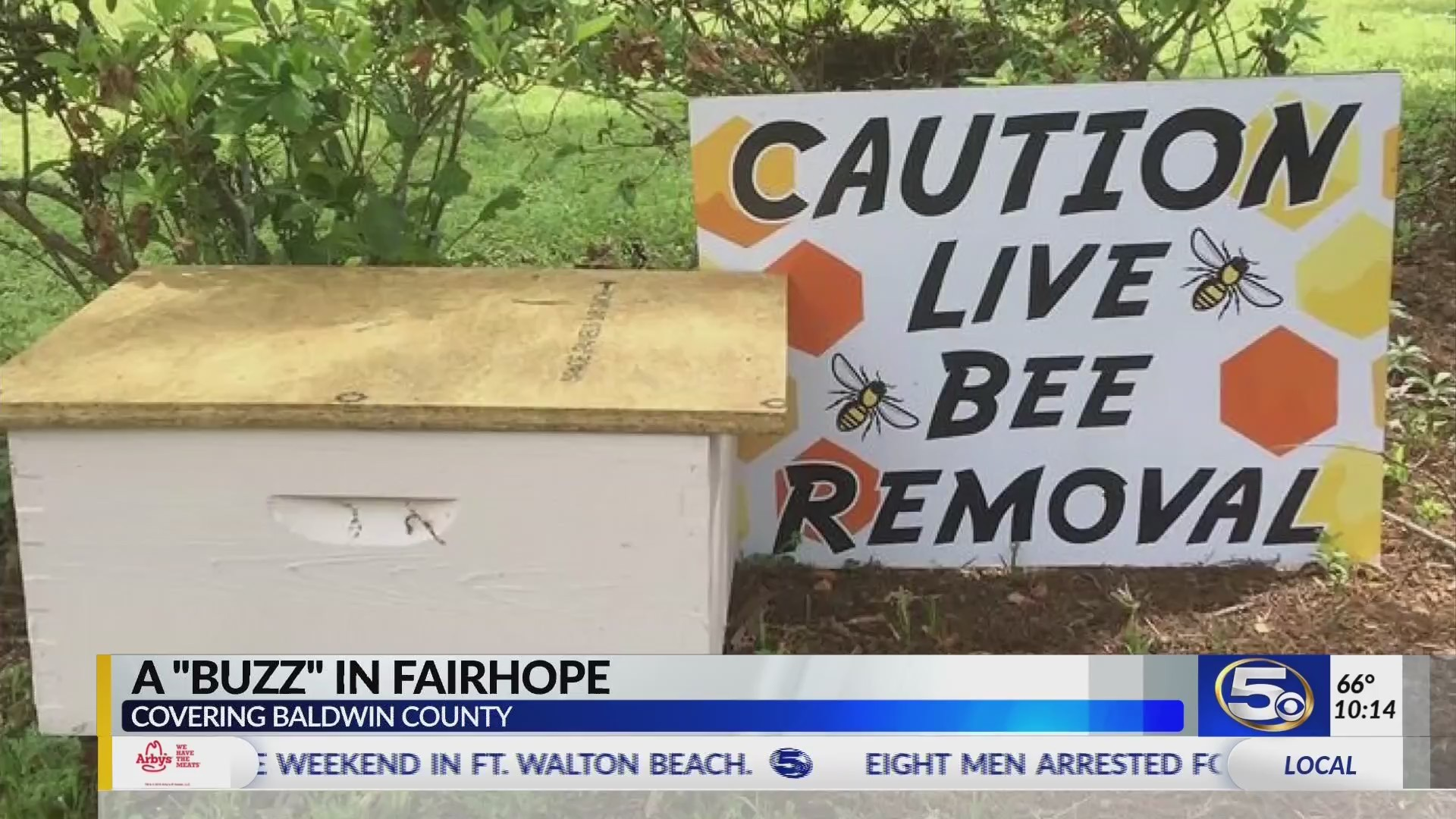 """VIDEO: Woman finds sign saying """"Caution, Live Bee Removal"""" in front yard with no explanation"""