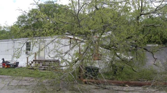 Madison Tree On Mobile home_43298