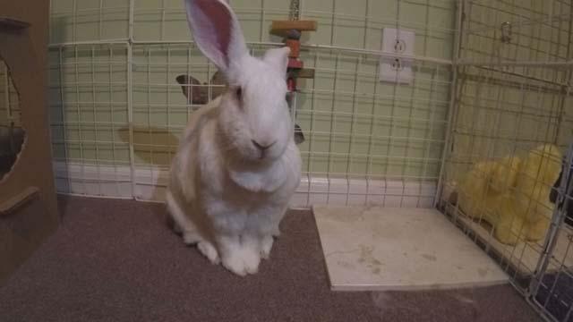 Bunnies Easter 2016_270336