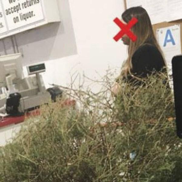 Costco Christmas tree_475638