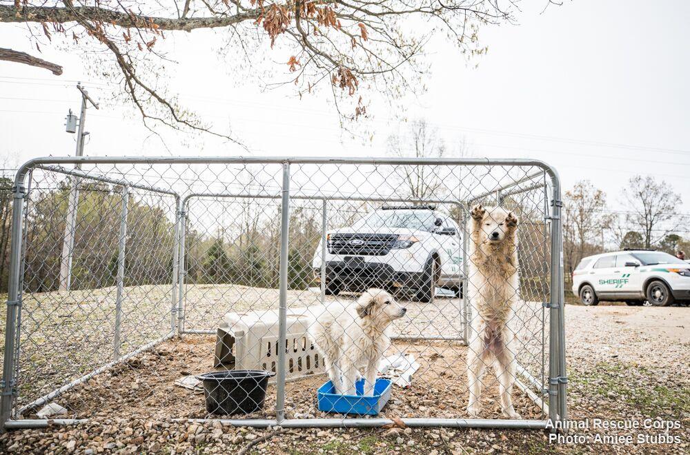 Carroll County animal rescue