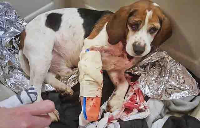 dog thrown on highway2_1544954228799.jpg.jpg