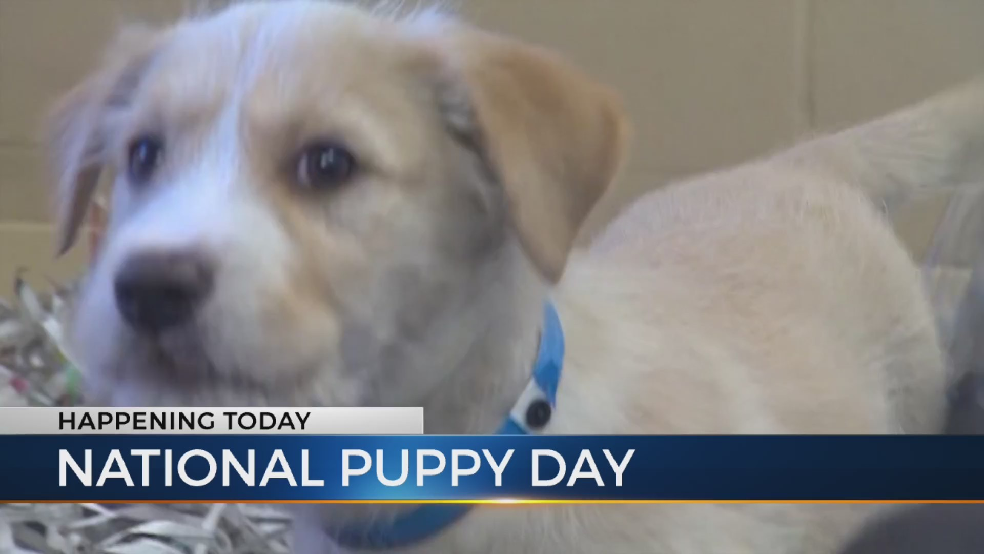 National_Puppy_Day_0_20190323122626