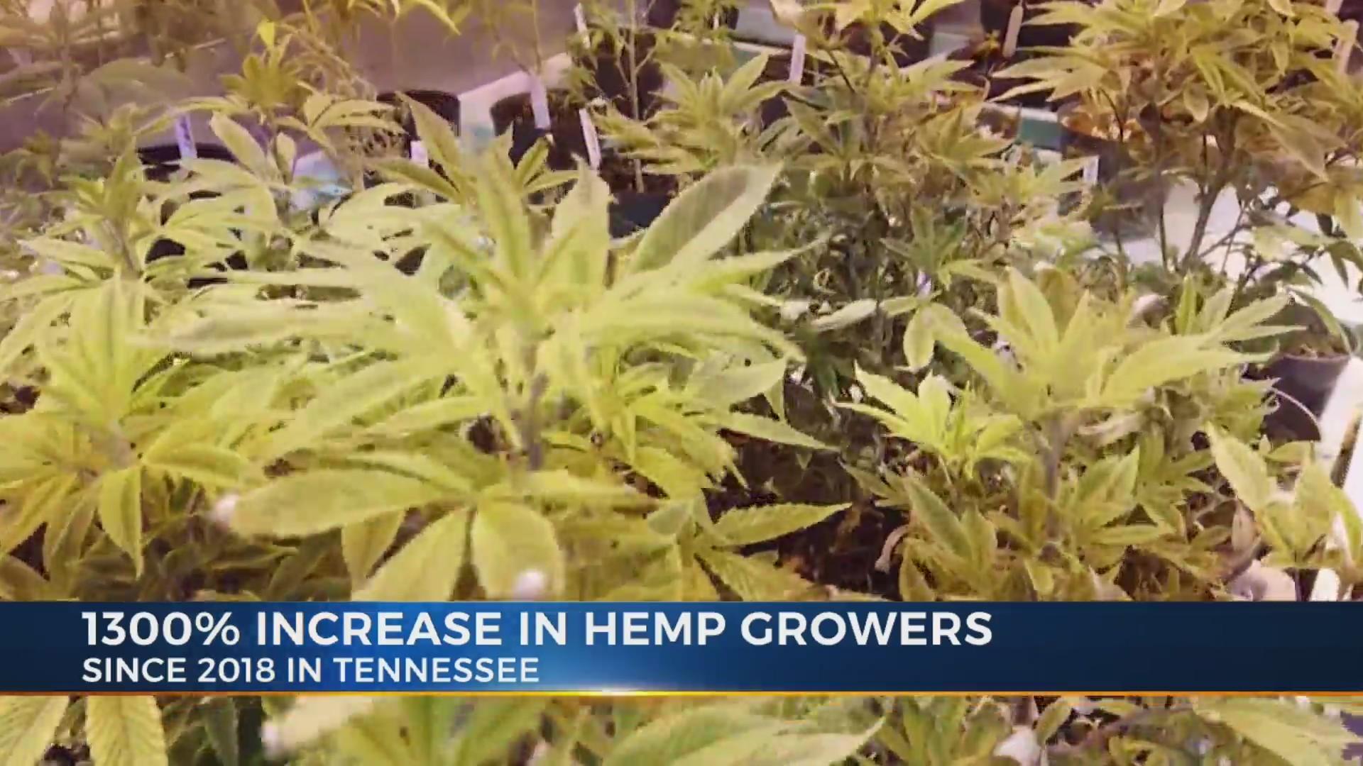 Number_of_licensed_hemp_growers_increase_9_20190412213544