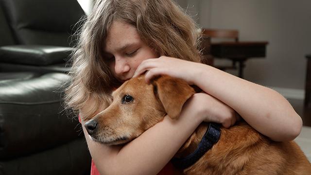 service dog web ap_1556977571246.jpg.jpg