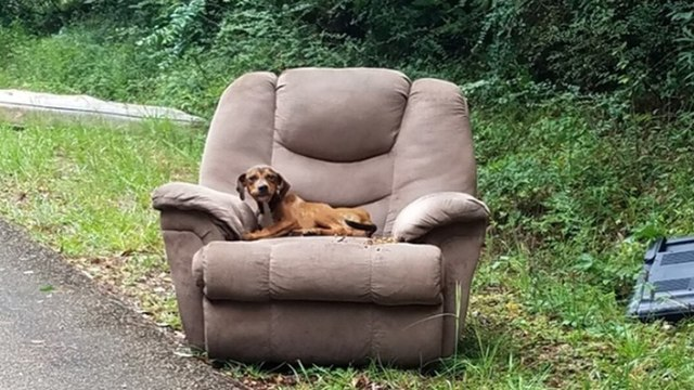 dog left in chair