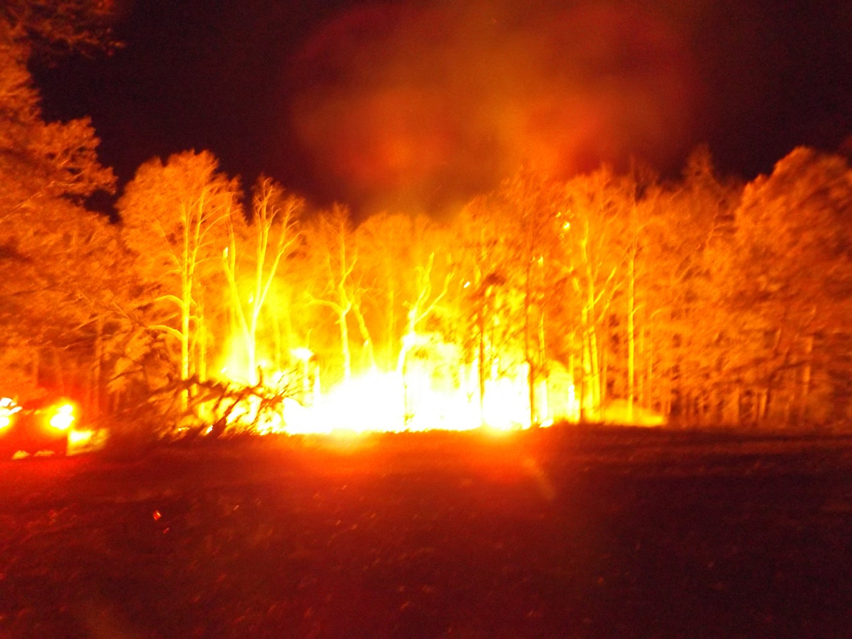 World S Largest Treehouse Burns Down In Crossville Wkrn News 2