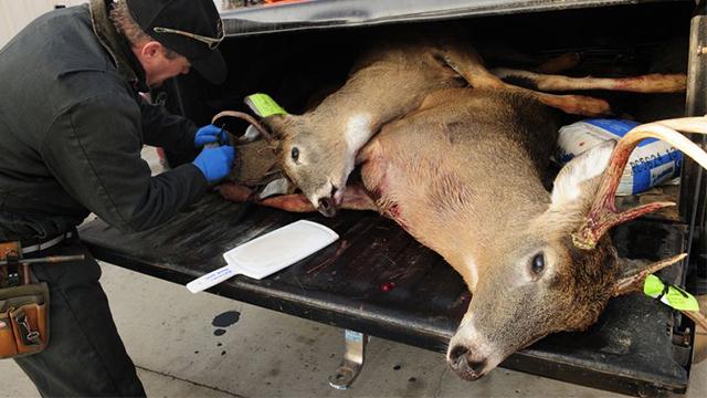 Nevada zombie deer