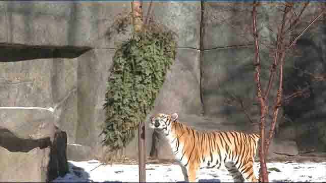 Zoo animals play with trees