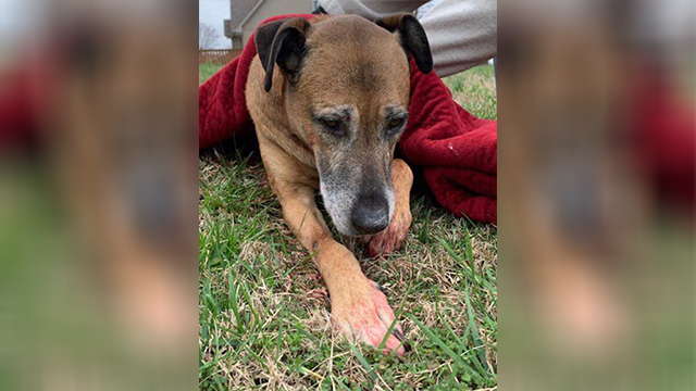 Mt. Juliet dog stabbed