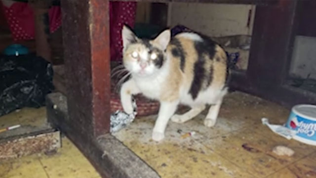 Giles County Cat Rescued - 020720