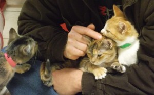 Kitties just want to be loved! Jake Owen (foreground), Belen (center), Brielle (right)
