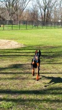 wyoming_dog_park