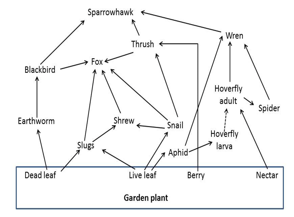 Food webs and feeding roles