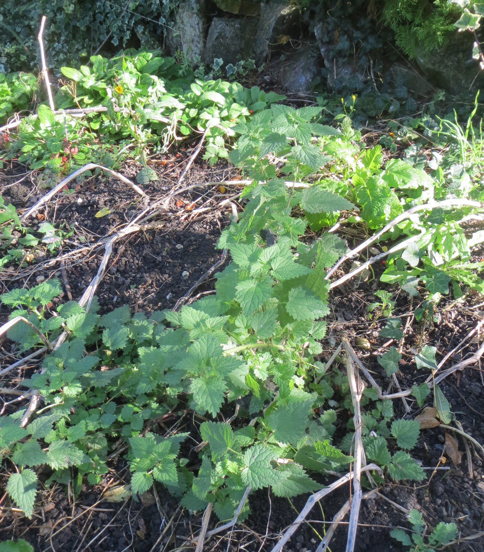 Plants For Herbivores