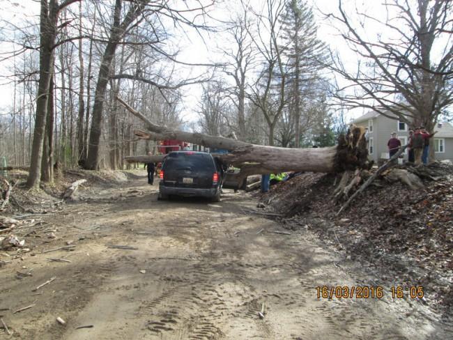 tree accident_140519