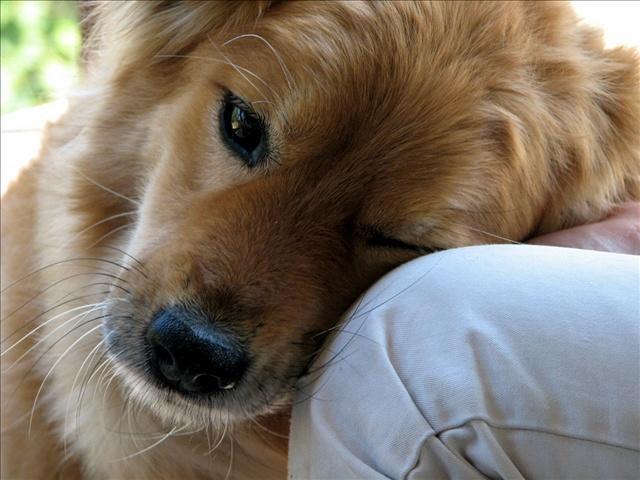 Dog_58094