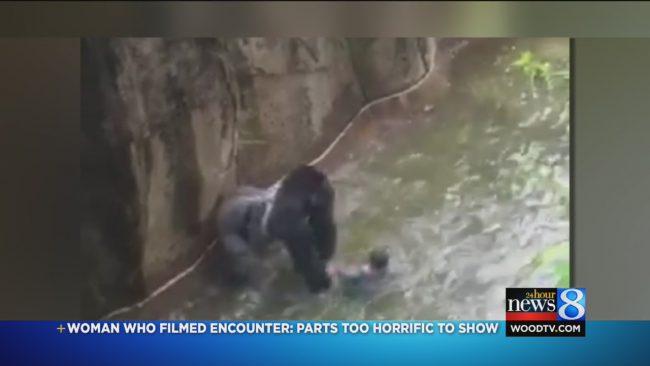 gorilla_160101