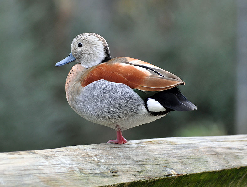 quackquakbang_181602