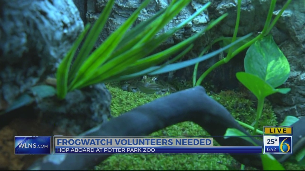 Frogwatch volunteers needed