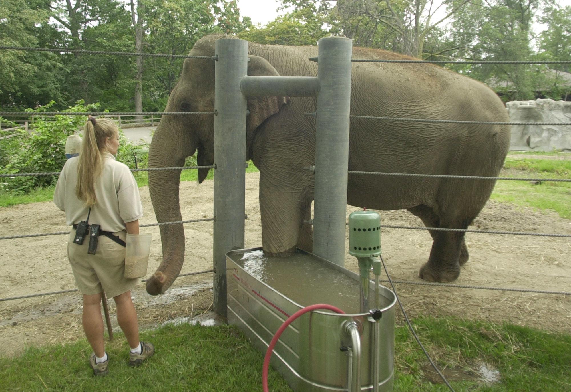 Detroit Zoo Elephants-Book_1522833917967