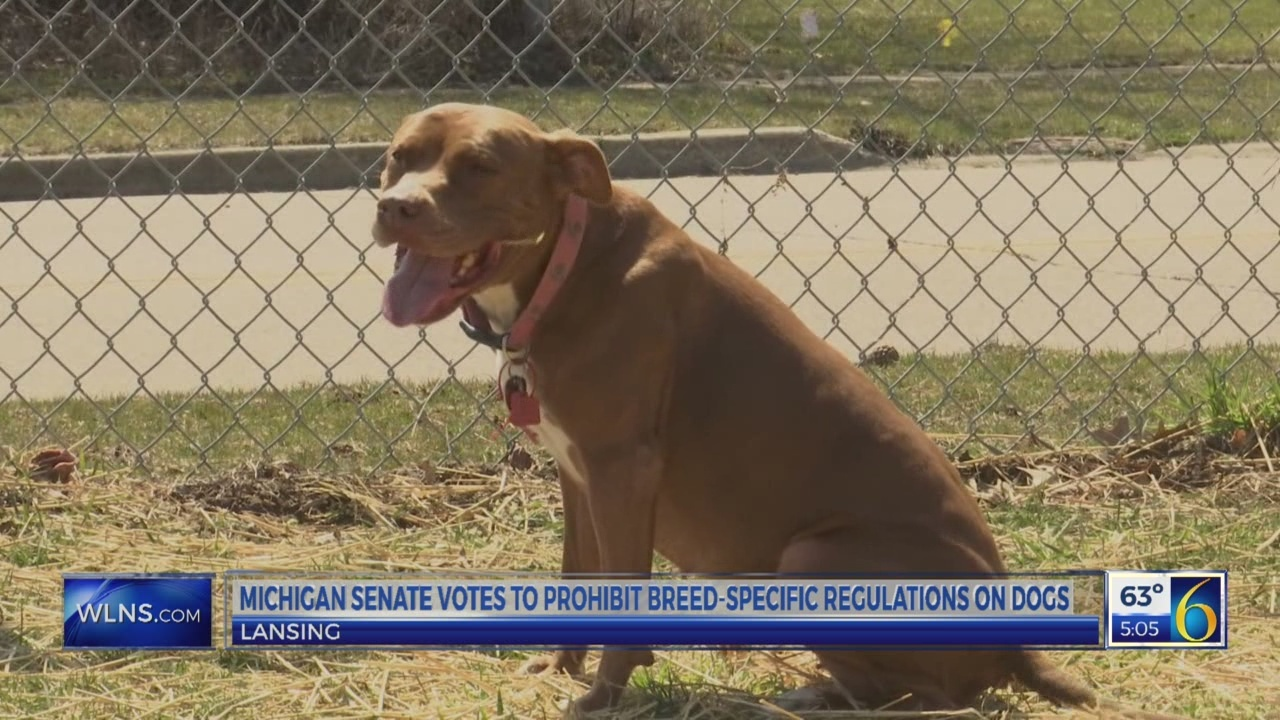 Michigan Senate votes for no bans on pit bulls