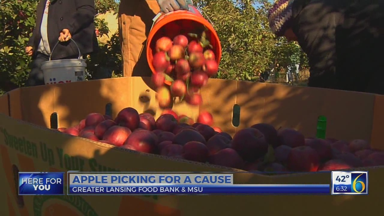 6 News This Morning: picking apples for those in need