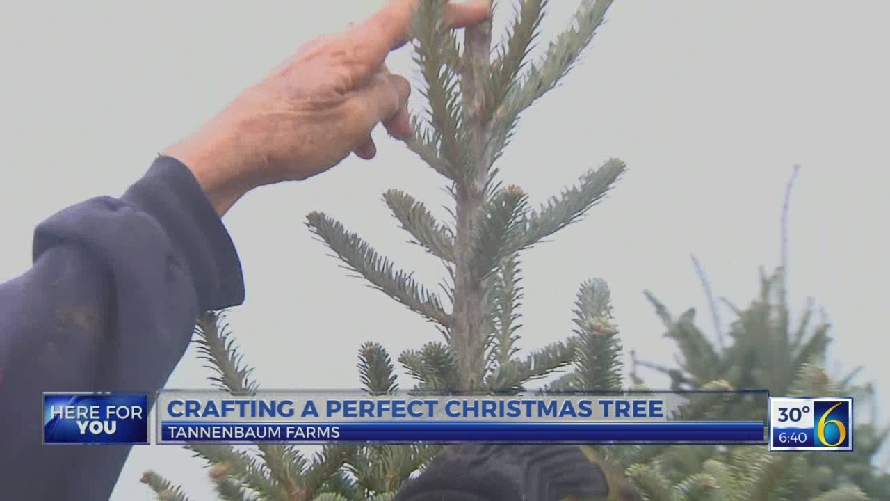6 News This Morning: christmas tree
