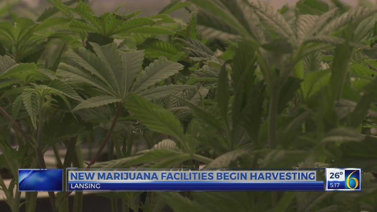 Marijuana facilities in Lansing