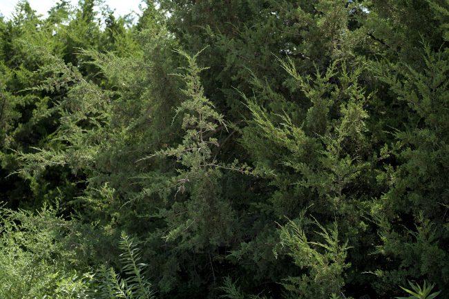 Spreading Trees_301884
