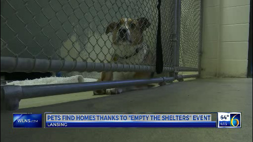 Empty the Shelters_1557013522985.jpg.jpg