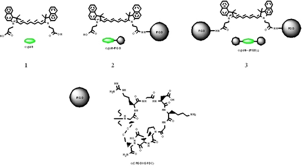 Novel Optical Agents Bearing One or Two iRGD Peptides for