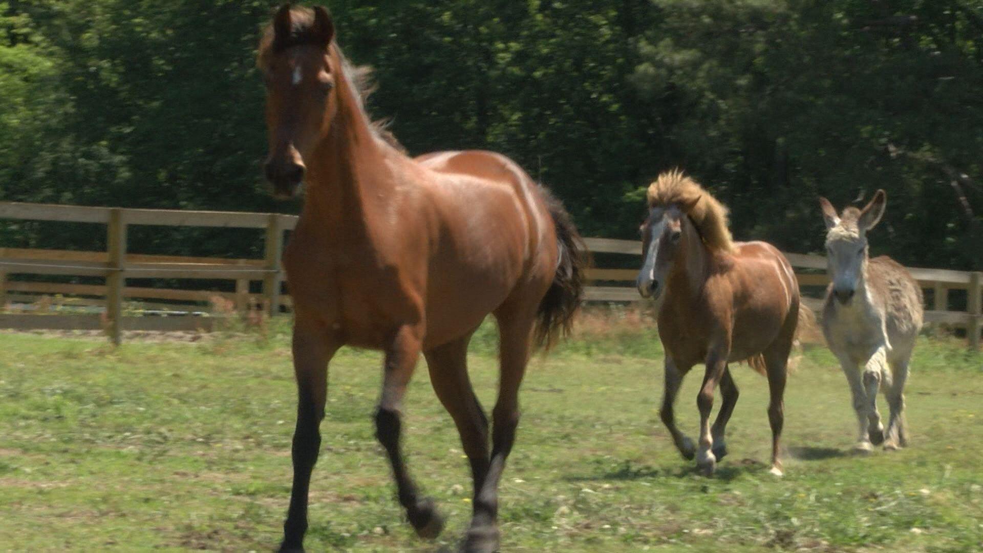 horse story_403863