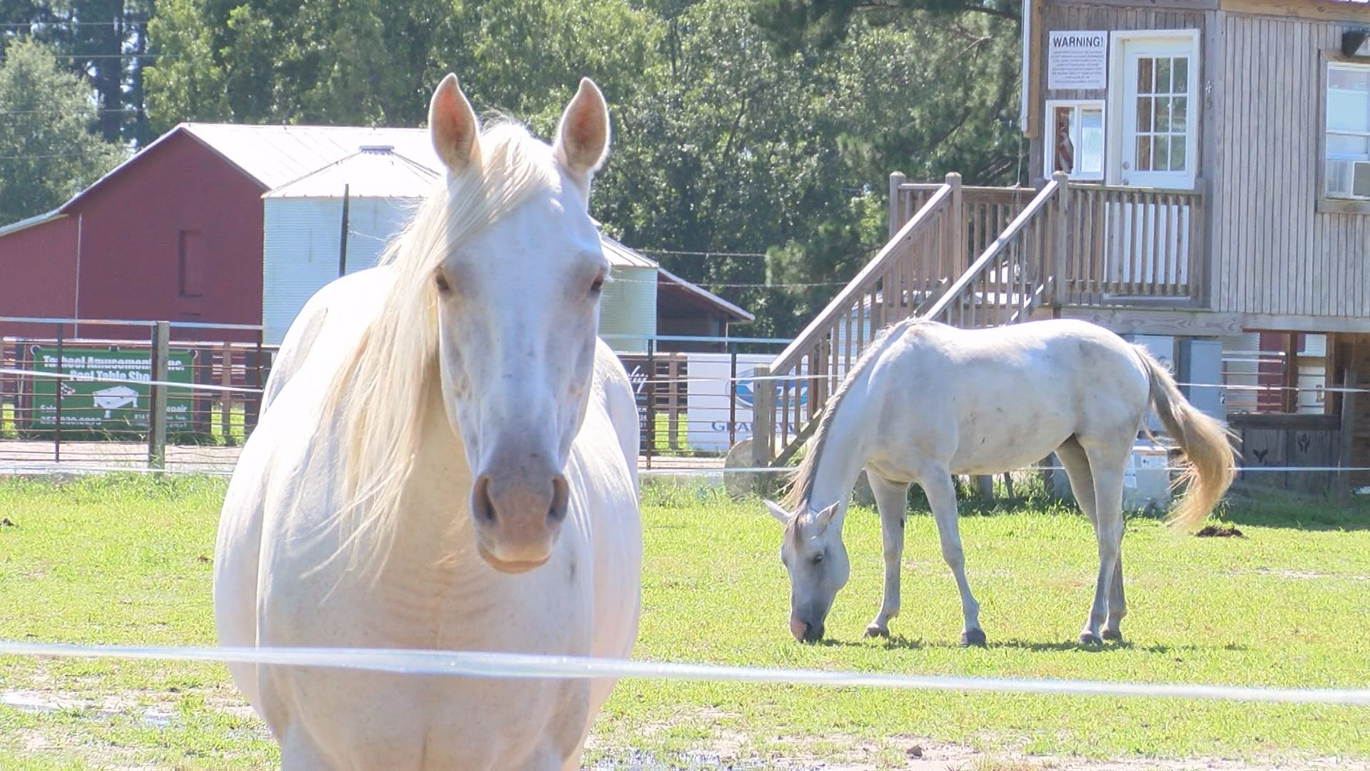 WEB STORY HORSE PREP_467648
