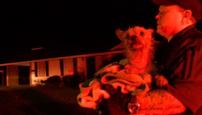 dog in fire_494244
