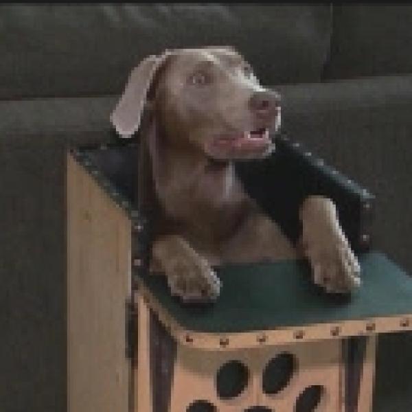 dog highchair_503639