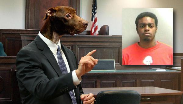 lawyer-dog-warren-demesme_501148
