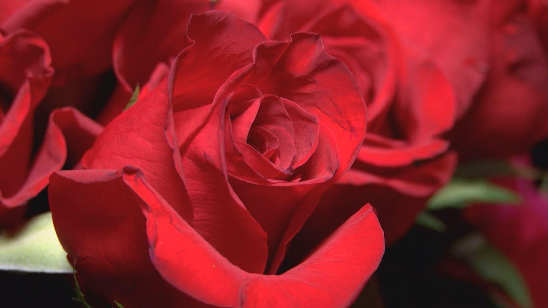 valentines day preps_562327