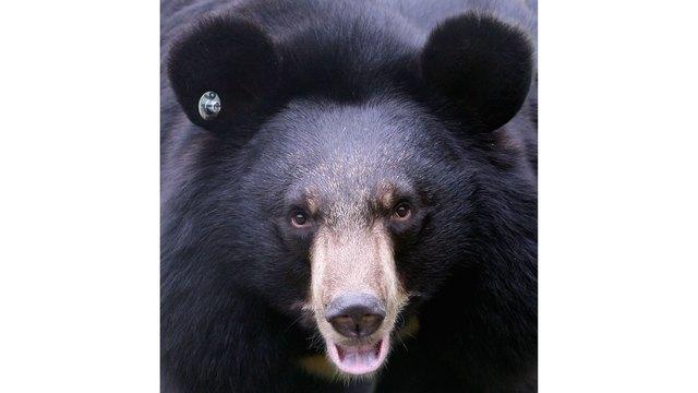 56005608MQX026_Bear_Center_1545222547694