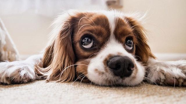 dog-generic_1533567466595_50847636_ver1.0_640_360_1547644859199.jpg