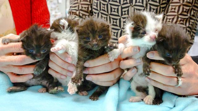 kitten_1557970901644_87734152_ver1.0_640_360_1558034319229.jpg