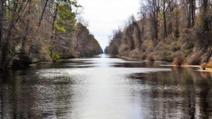 Bill seeks a new special designation for Great Dismal Swamp