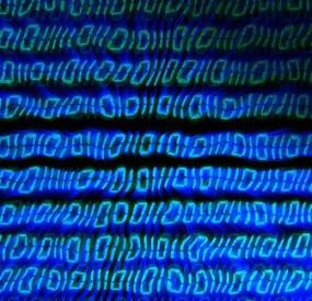 DigitalCode
