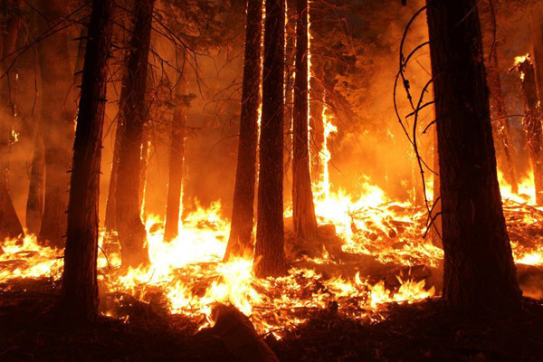 Yosemite National Park has been decimated by fire in the summer of 2013.