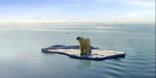 Polar bear climate change global warming